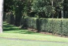 Abbeyard Wire fencing 15